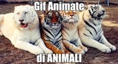 gif animate - di animali